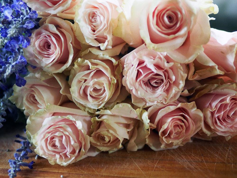 cu.roses.jpg