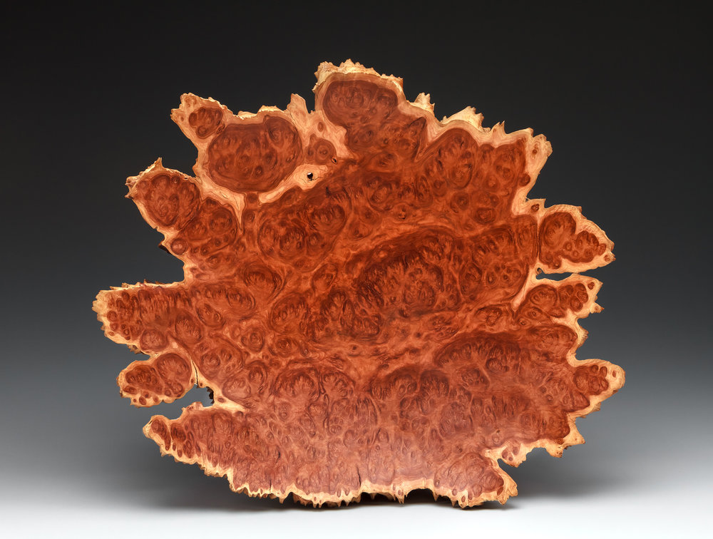 yorrel wood eucalyptus burl