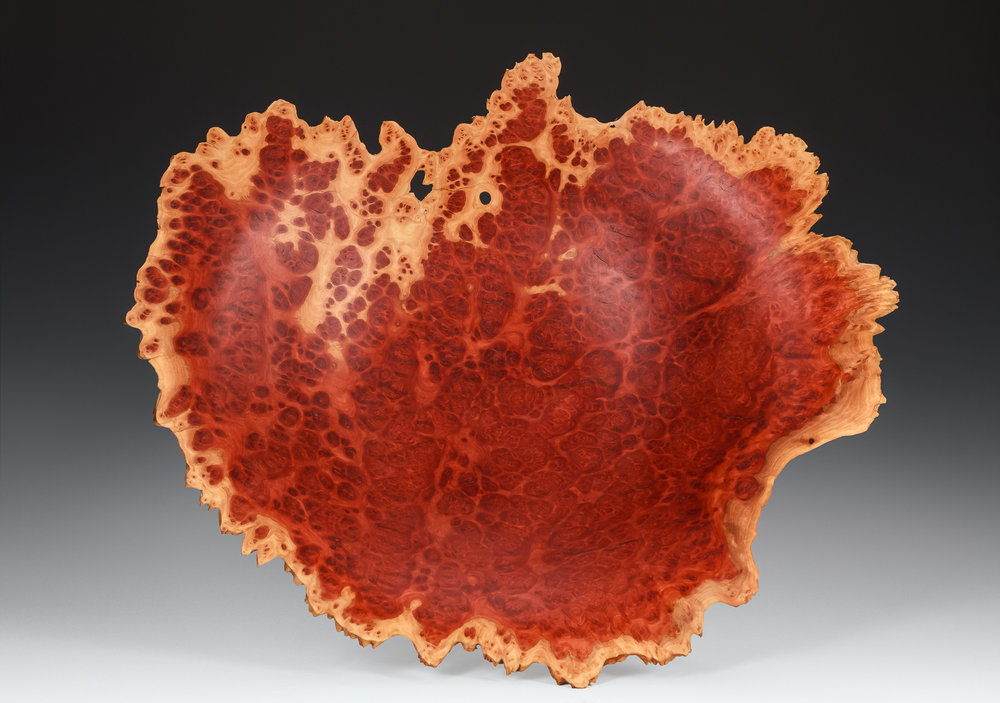 red morrel eucalyptus burl