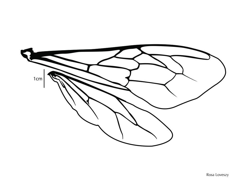 beewing.jpg