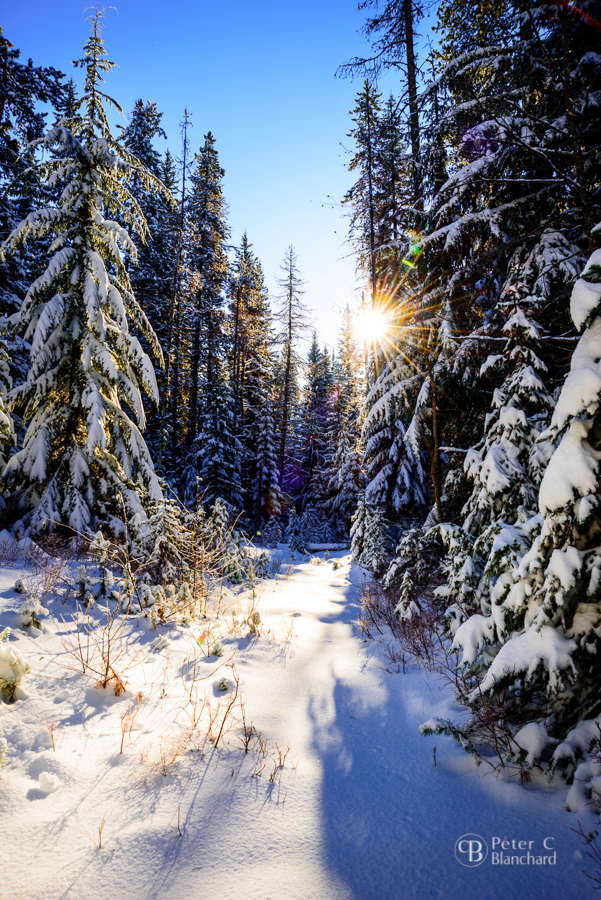 Morning sun in the snow, taken with  Nikon D800  and  Nikkor 24-85mm .