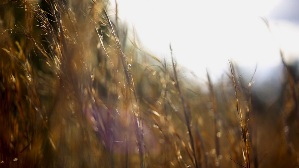 golden.jpg