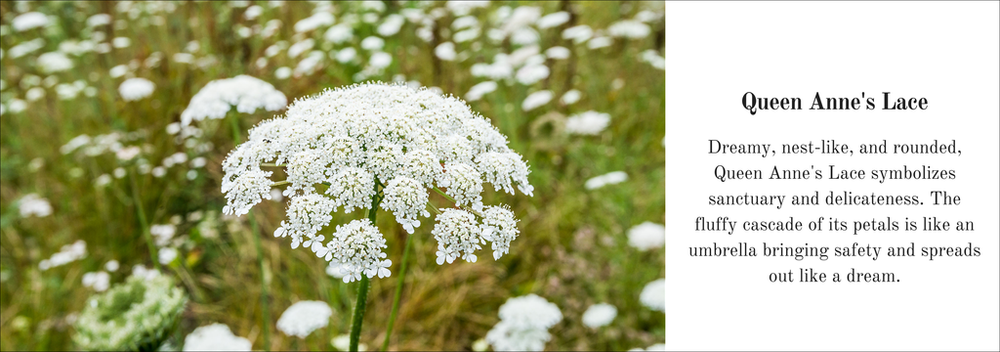 This is the image found above the Queen Anne's Lace collection! Love the description, and that every flower they use has symbolism.