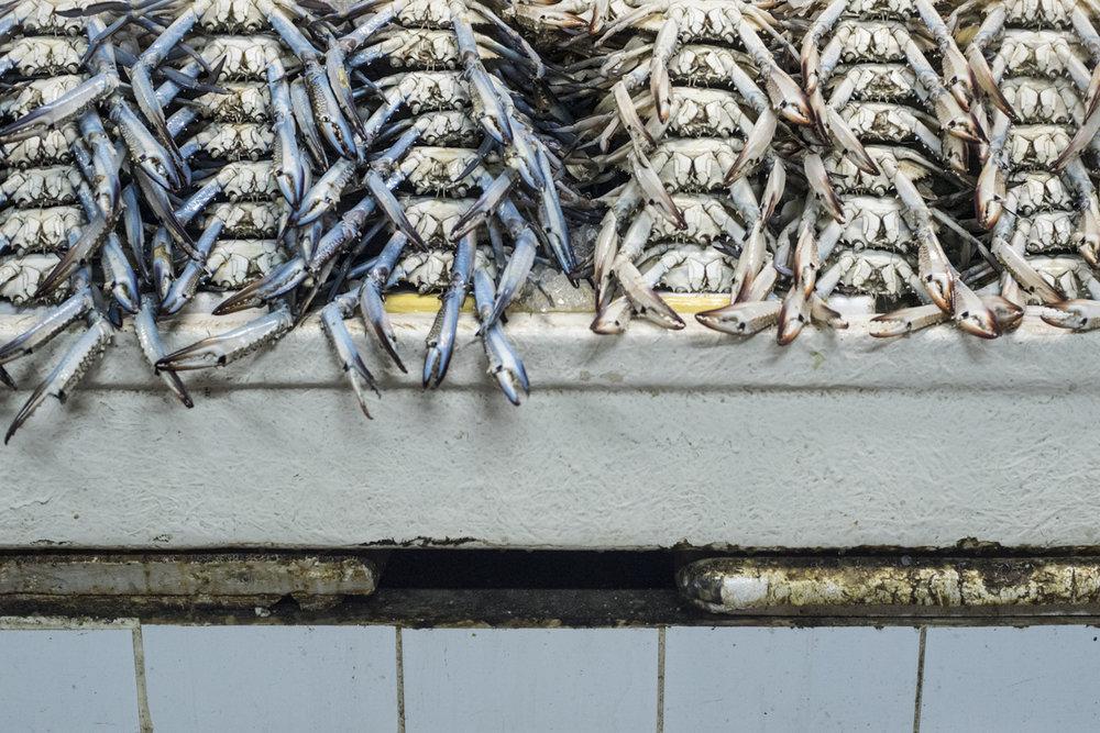 Fish Market-0667.jpg