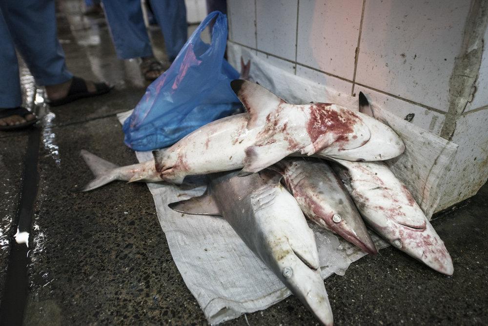 Fish Market-0806.jpg