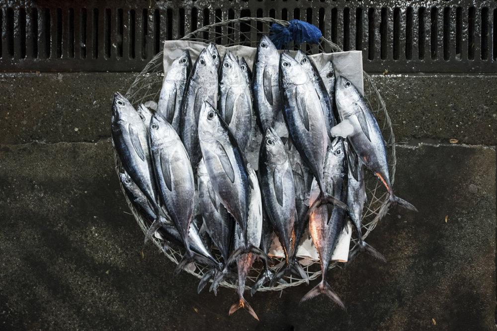 Fish Market-0746.jpg