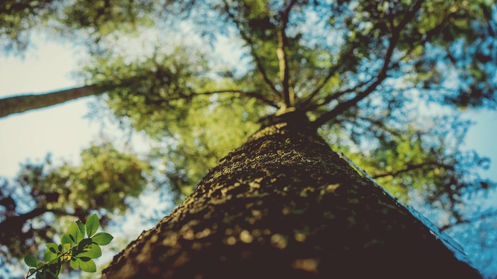 Environmental and Social impact