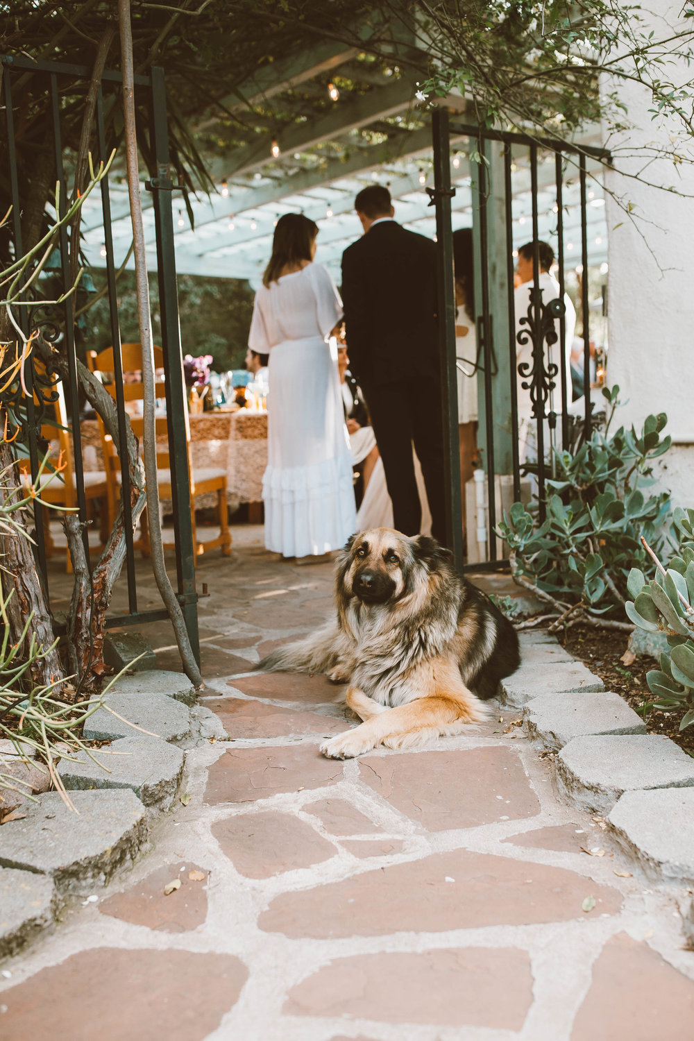 Brittany and Tim's San Diego Backyard Wedding 284.jpg