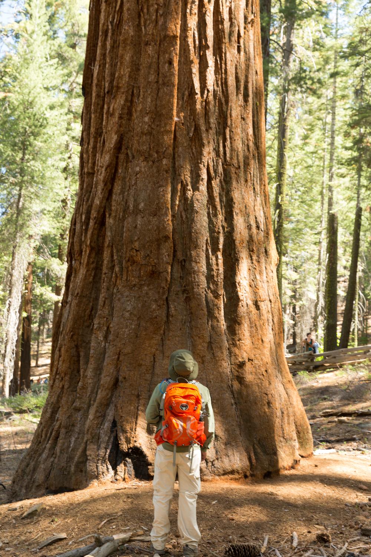 Yosemite  (9 of 12).jpg