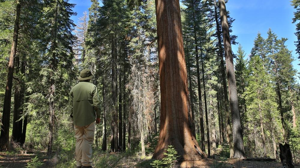 Yosemite  (7 of 12).jpg