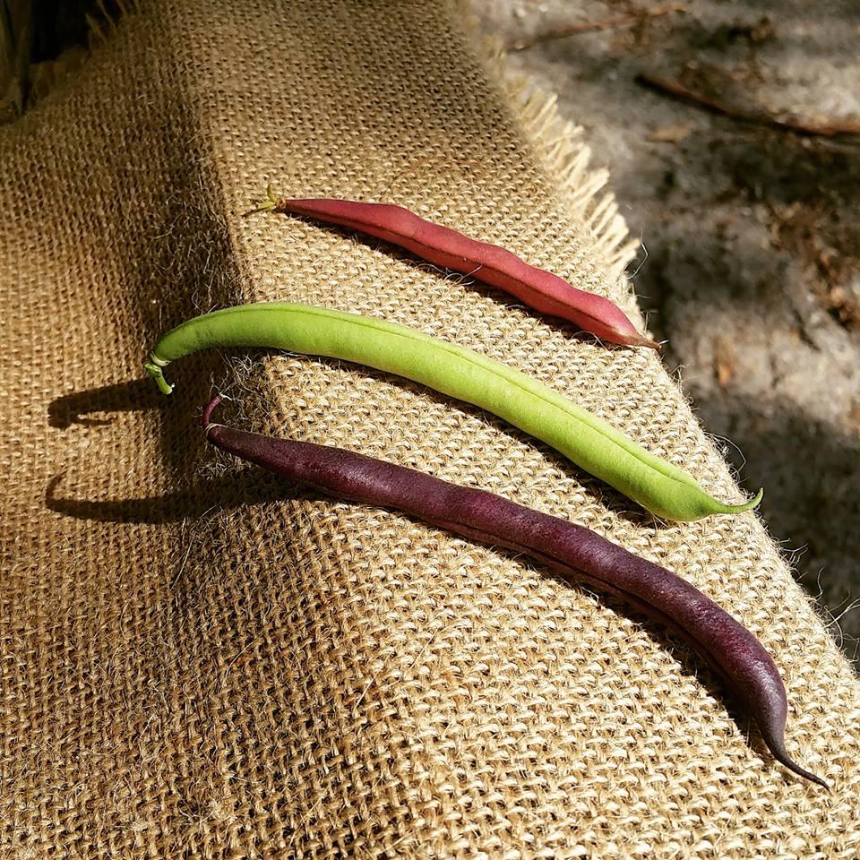 Green Beans.jpeg