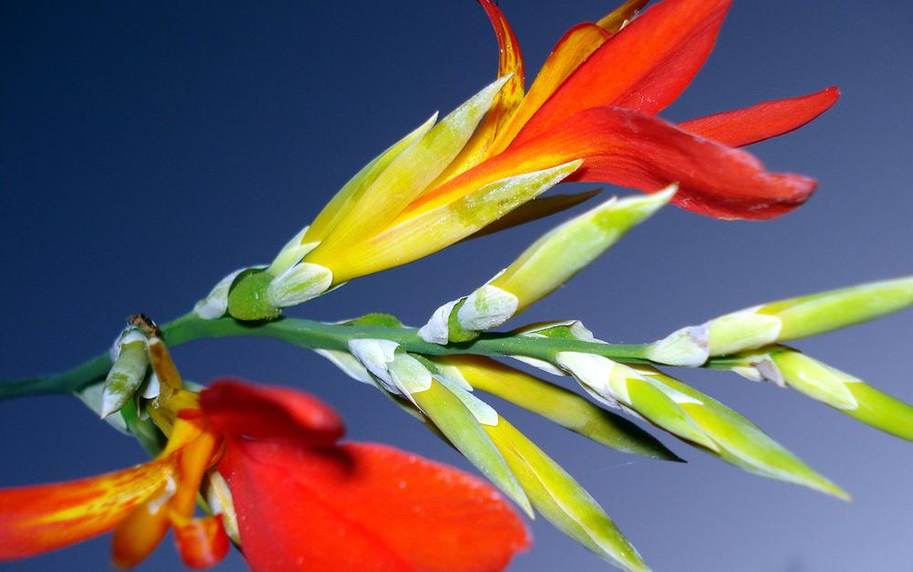 flowers-1367758-1279x800.jpg