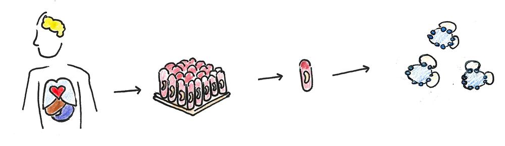 moleculesflow
