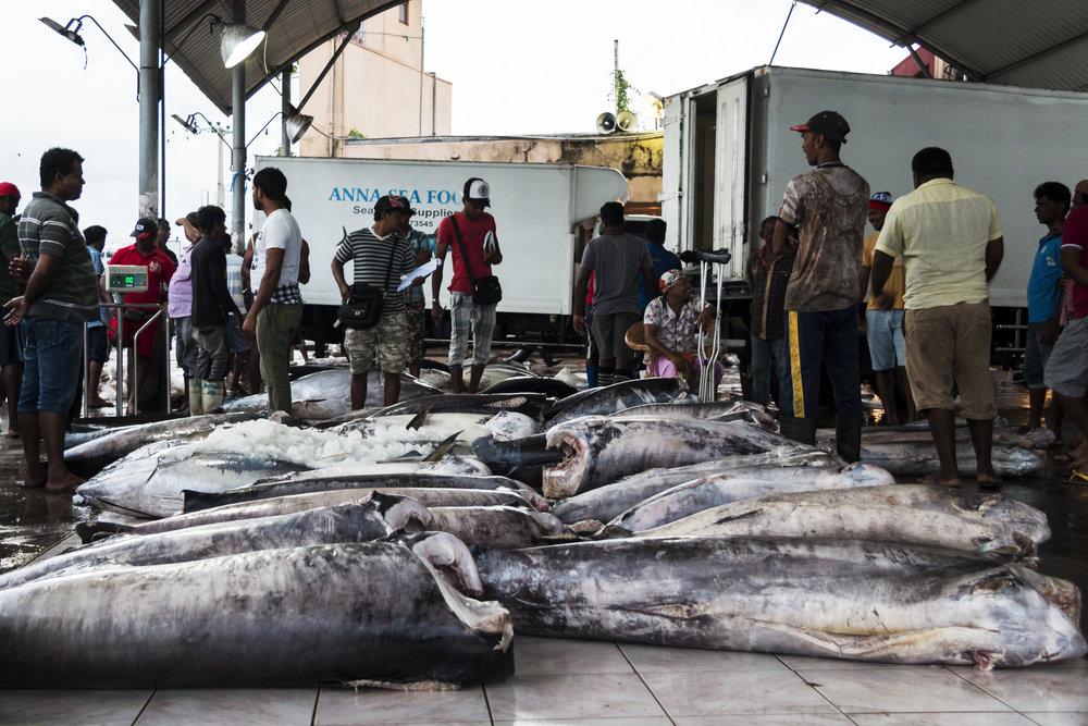 negombofishmarket2.jpg