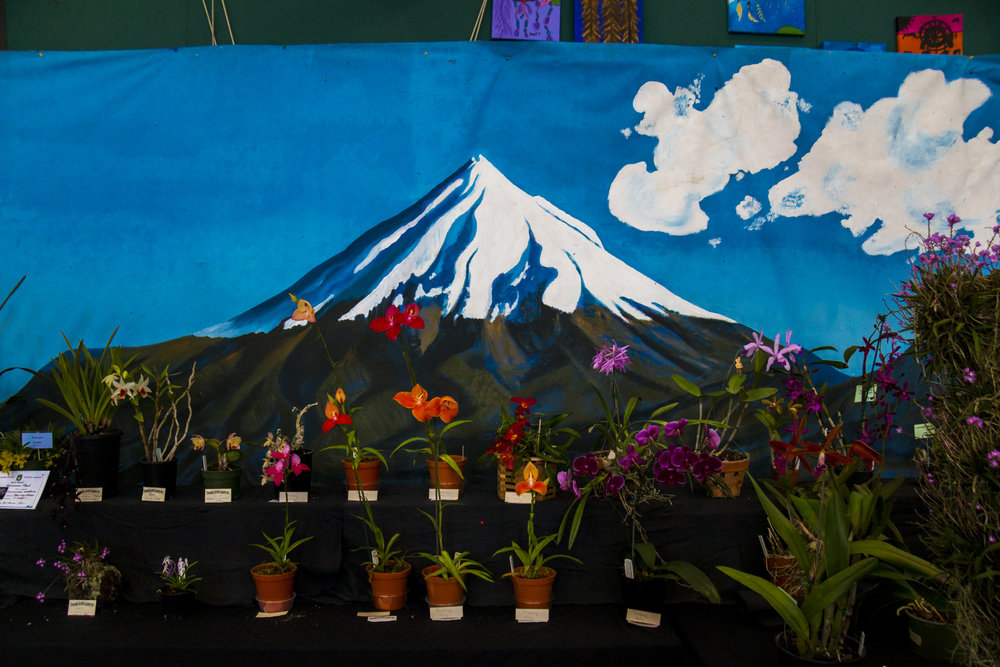 orchidshow.jpg