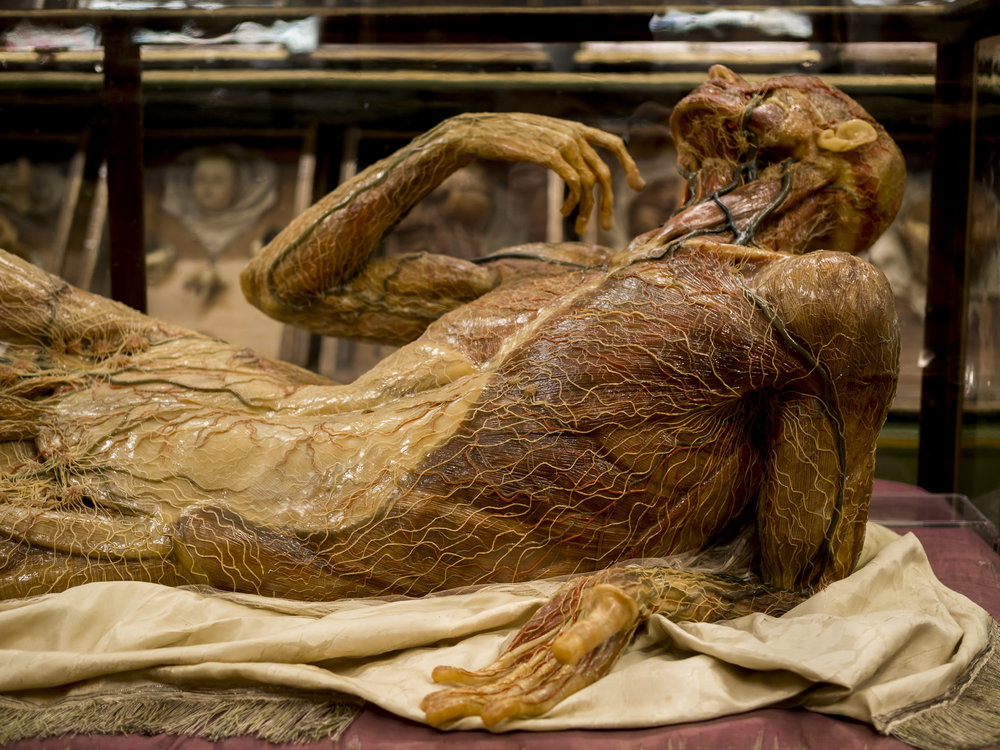 anatomicalwax.jpg