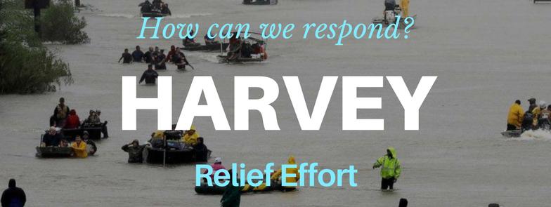 Harvey Website.png