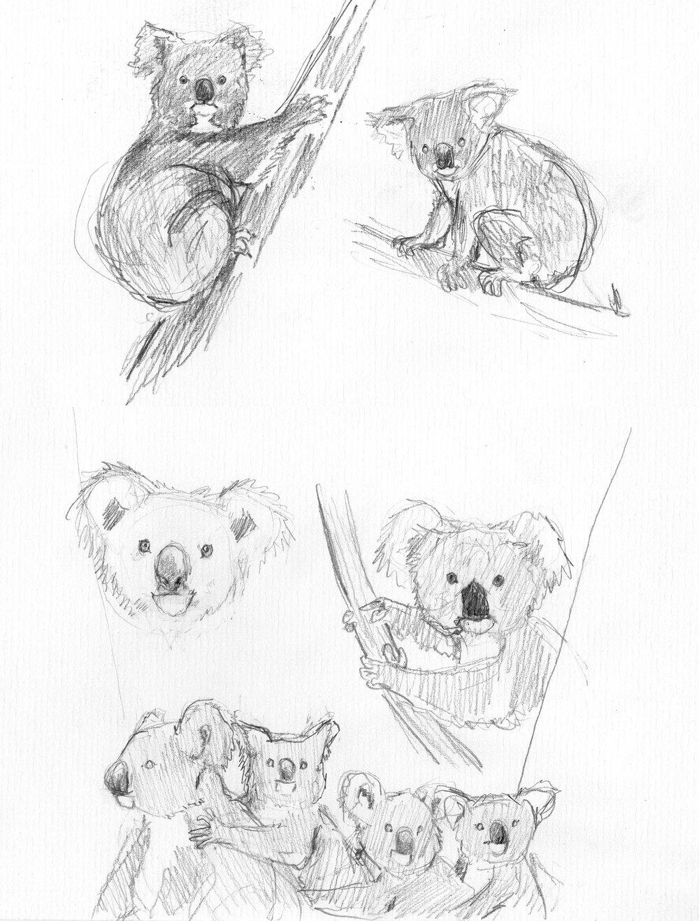 koala scan 2_26_16004 smaller.jpg