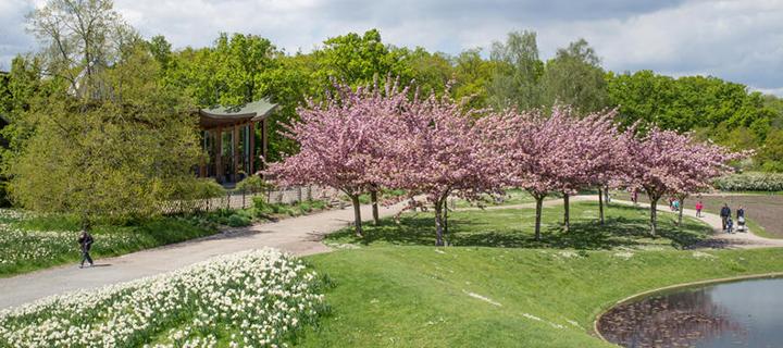 Photo credit : Parc floral de Paris