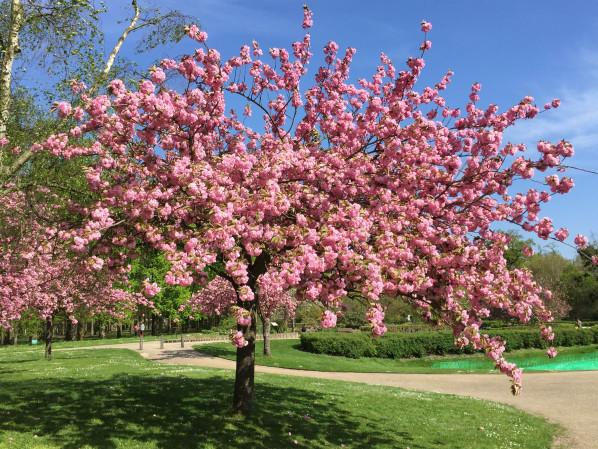 Photo credit:Paris côté jardin