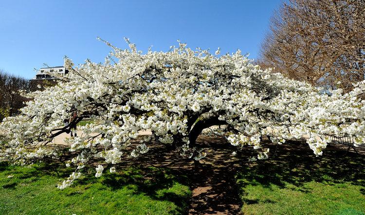 Photo credit: Jardin des Plantes