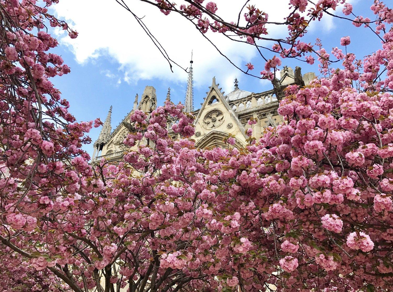 ทิวทัศน์ Parc Floral ที่ Vincennes ในฤดูใบไม้ผลิ (รูปภาพจาก @photos.parisinfo.com)