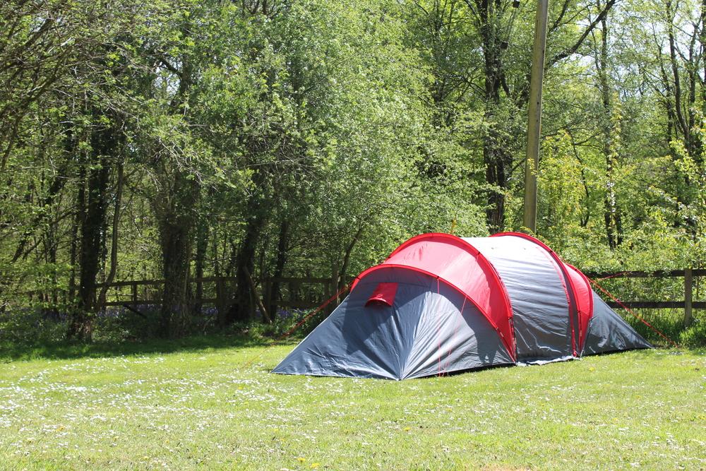 spacious grass camping area