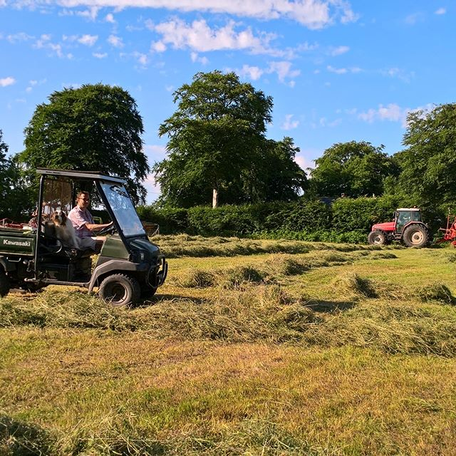 It's haymaking time in our meadow field!