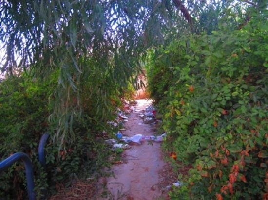 View showing the littering in one of the park's pathways   لقطة تبين النفايات المرمية على أحد ممرات الحديقة