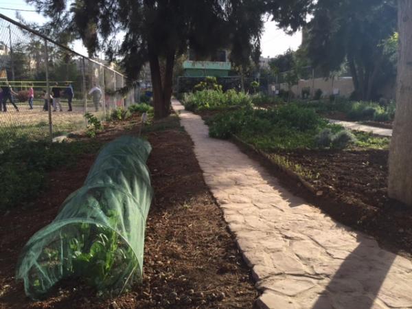 View of the organic farming space in the garden showing vegetables and herbs grown by Nour al-Barakah members   لقطة لمنطقة الزراعة العضوية في الحديقة تبين الخضار والأعشاب التي يقوم أعضاء الجمعية بزراعتها