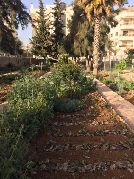 View of the organic farming space in the garden showing vegetables and herbs    grown by Nour al-Barakah members   لقطة لمنظقة الزراعة العضوية في الحديقة تبين الخضار والأعشاب التي يقوم أعضاء الجمعية بزراعتها