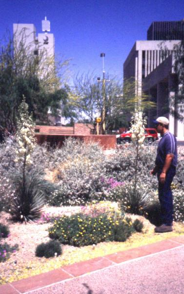 Fig. 8: A low water consuming public landscape design in Phoenix, Arizona.