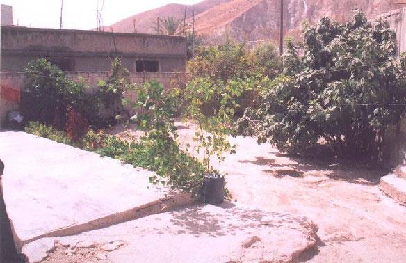 Figure 4.3: Graywater-irrigated yard foliage (Photograph by CSBE)