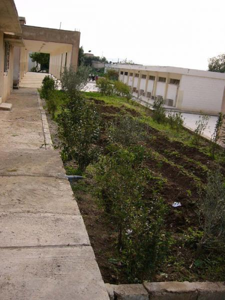 Figure 3.9: Irrigated Area at al-Adasiyyah Girls' School.