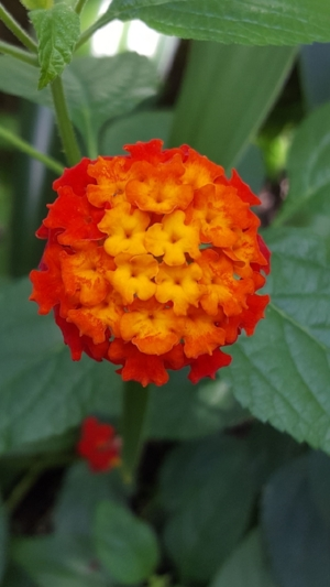 Image source: www.plantsmap.com