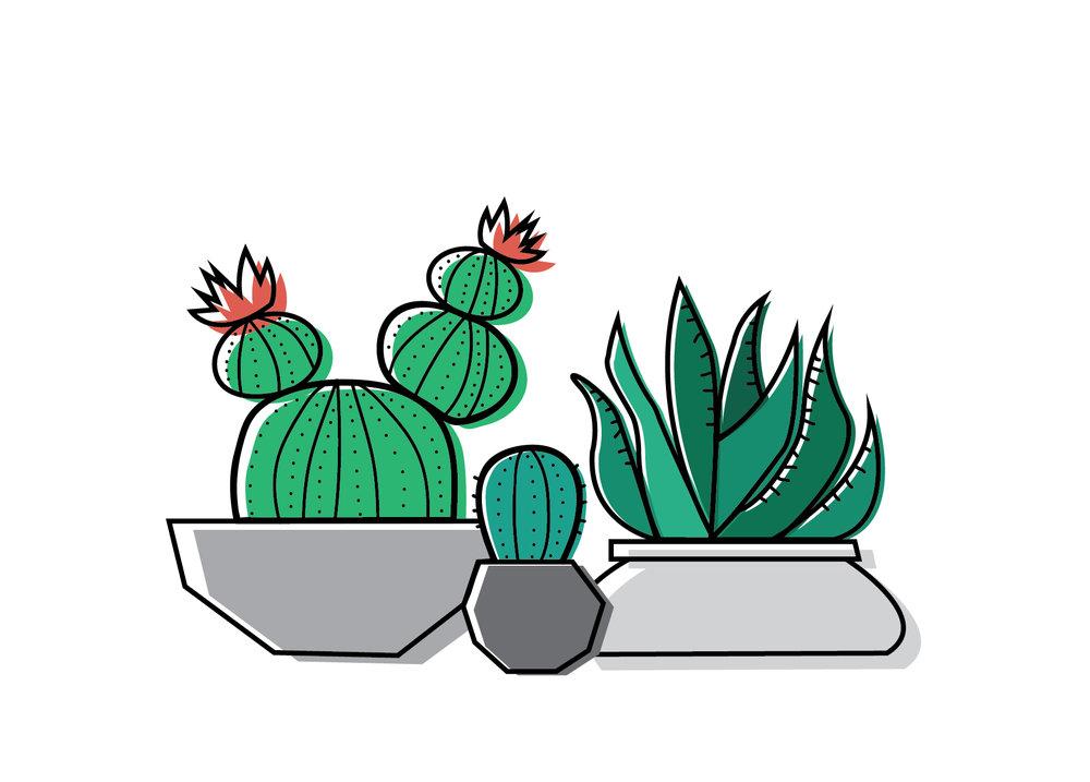 cactus3.jpg