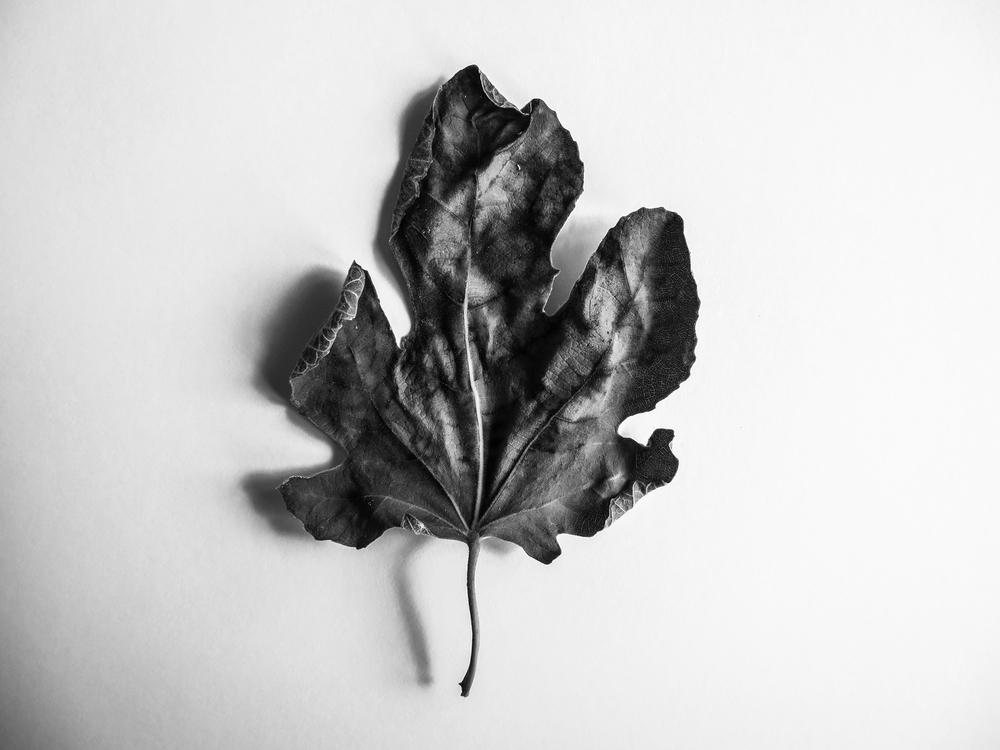 Third leaf