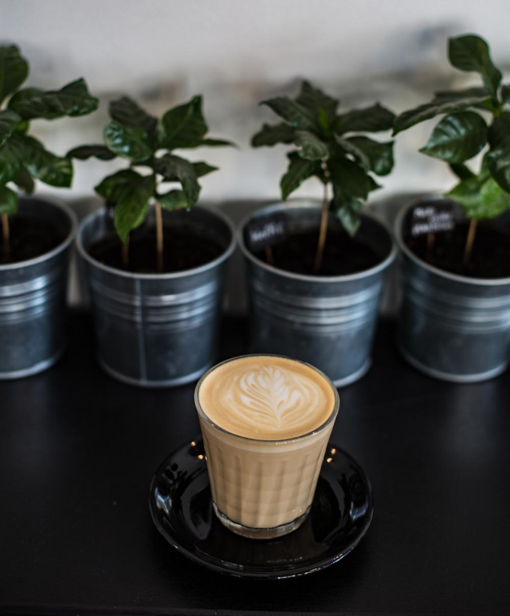 Kolonel Koffie Specialty Coffee Antwerp