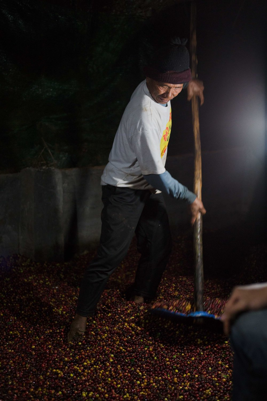 pangkhon coffee farm chiang rai thailand