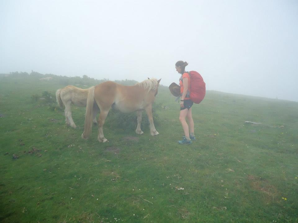Spanish Mountain Ponies