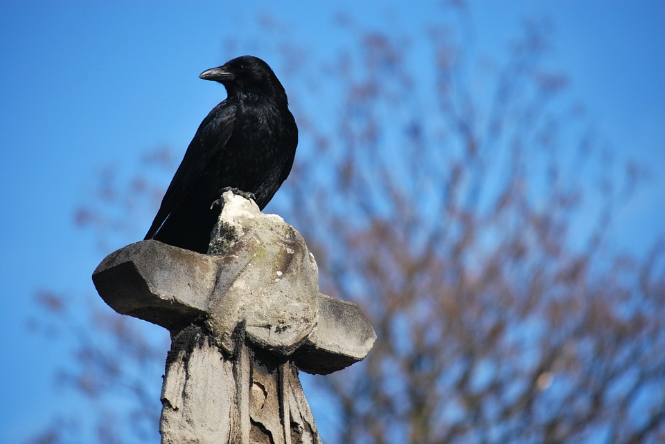Sentinel bird