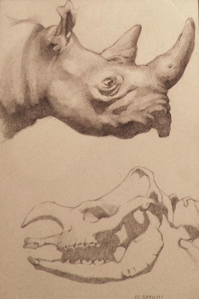 rhino-kopia.jpg