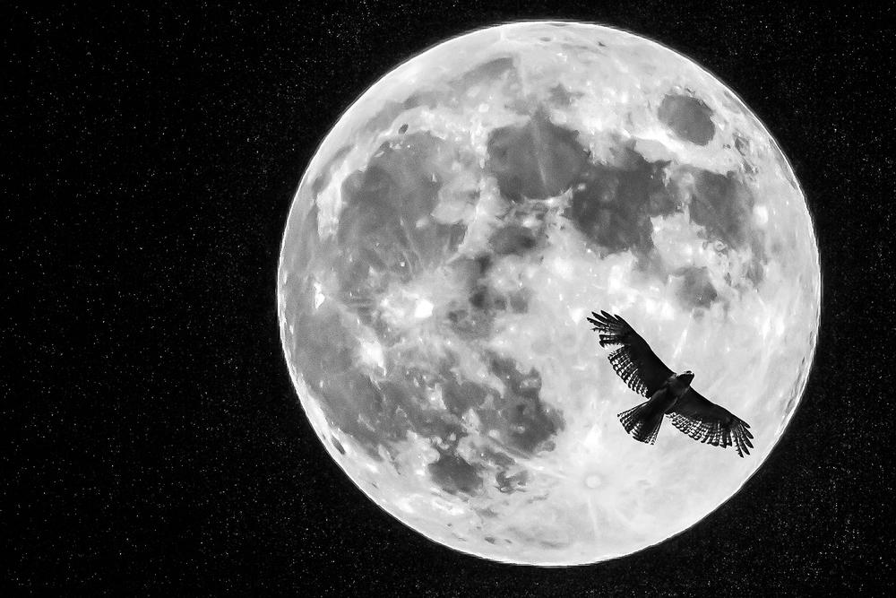 Night Flyer 1131