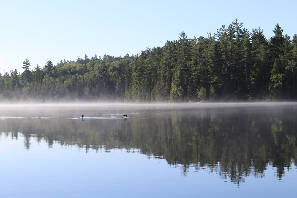 Beautiful morning featuring 2 loons on The Three Sisters Lake in Temagami