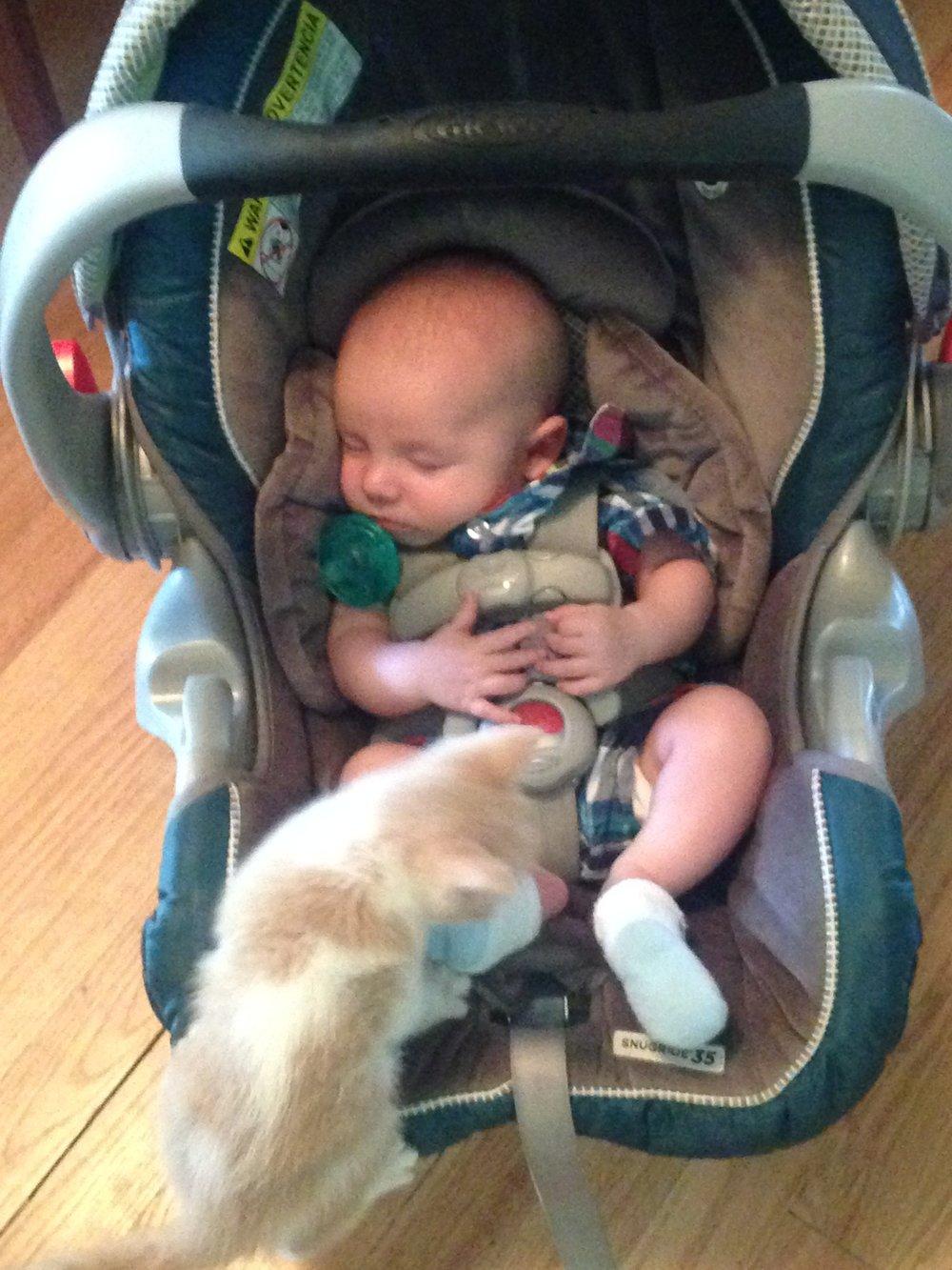 Will and kitten, Denver, CO