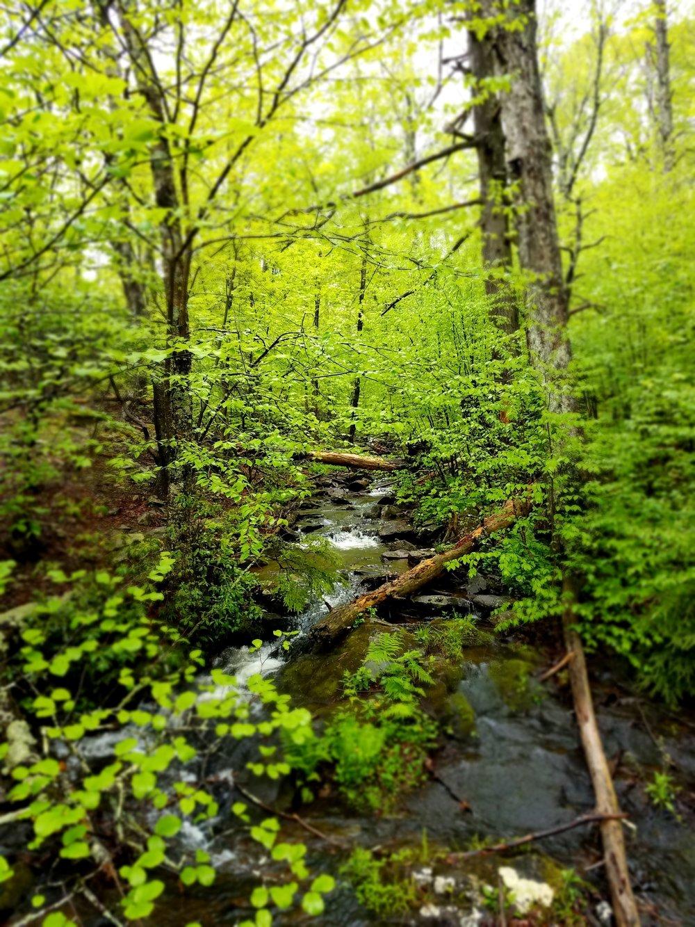Lost Hollow Falls Trail