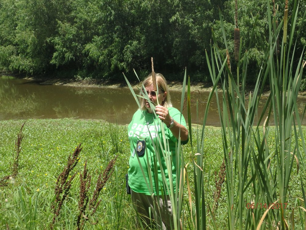 Week 2: Urban wetland assessment
