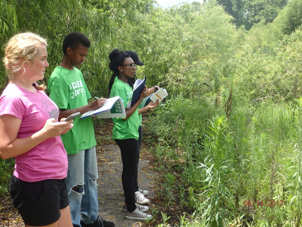 2017 Week 2: Urban wetland assessment