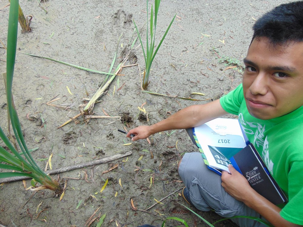 Week 2: Urban wetland assessment