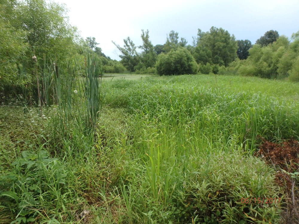 2017 Week 2: Urban wetland assessment